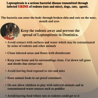Leptospirosis Prevention Tips